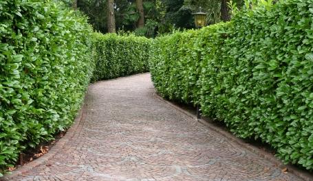 Escribano jardineros tu primer jard n - Arbustos de jardin ...